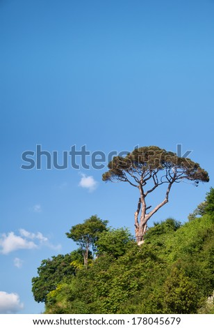Pine Tree Against The Blue Sky - stock photo