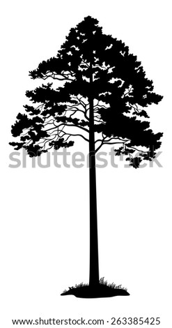 Pine Tree and Grass Black Silhouette Isolated on White Background.  - stock photo
