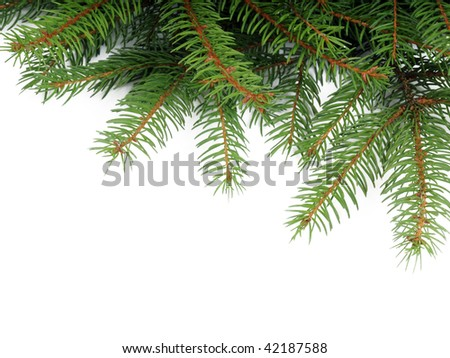 Pine Tree Backdrop - stock photo