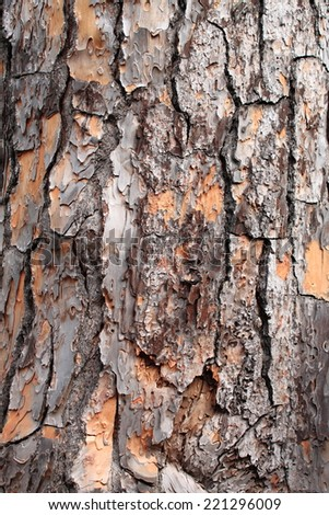 Pine tree bark - stock photo