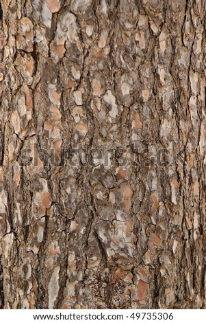 Pine tree bark texture - stock photo