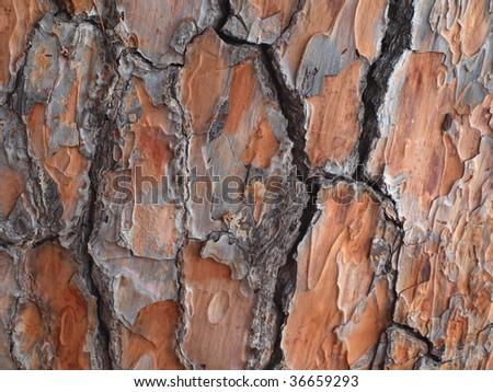 Pine tree bark texture abstract background - stock photo