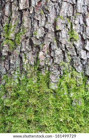Pine tree bark texture with green moss - stock photo