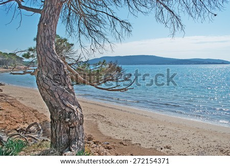 pine tree by the shore in Mugoni - stock photo