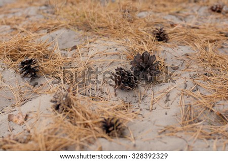 Pine tree cones on the sand and  fir-needles in the forest - stock photo