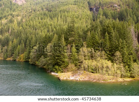 pine tree forest on a mountainside beside a lake