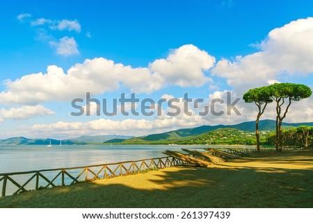 Pine tree group on the beach and sea bay background. Punta Ala, Tuscany, Italy - stock photo