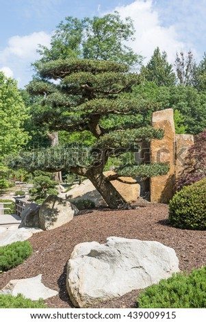 Pine tree in the Japanese garden. Stones are in the foreground. Vertically - stock photo