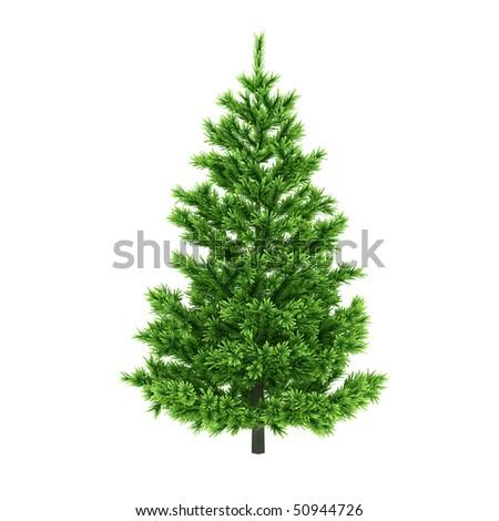 Pine tree isolated on white background - stock photo