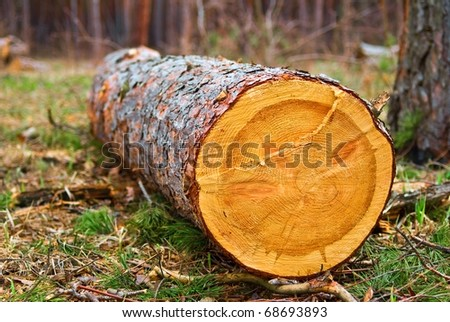 pine tree log in a forest - stock photo