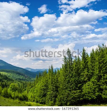 pine tree mountain forest - stock photo
