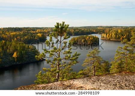Pine-tree on a background of autumn lake landscape - stock photo
