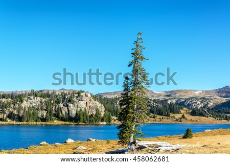 Pine tree on a lakeshore in Shoshone National Forest in Wyoming, USA - stock photo