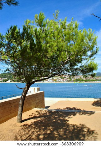 Pine tree on coastal path in S'Agaro, Costa Brava, Spain - stock photo