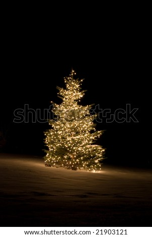 Pine tree outside lit up with Christmas lights - stock photo