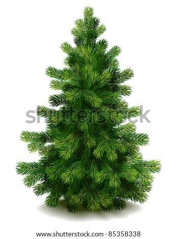 Pine tree - raster version - stock photo