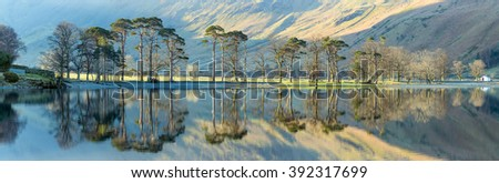 Pine tree's being lit by the morning sun on a calm spring morning at Buttermere in the Lake District with reflections.