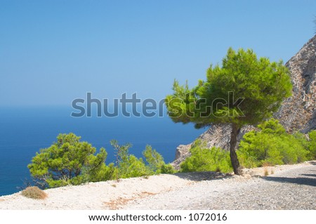 Pine tree, Santorini, Greece - stock photo