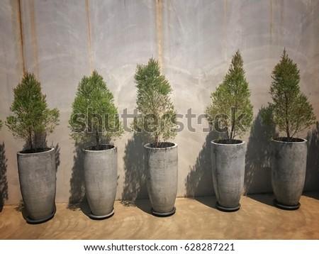 Pine Seedlings Stock Images Royalty Free Images Vectors  - Christmas Tree Seedlings