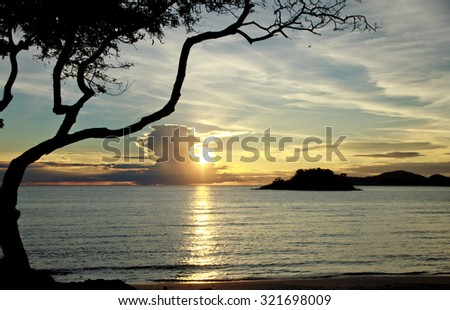 pine tree silhouette against sea sunset and mountains - stock photo
