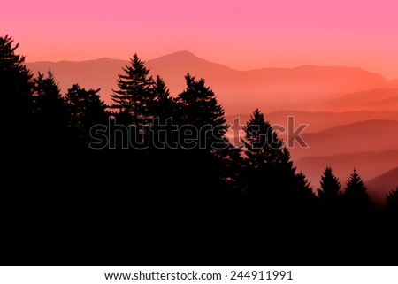 Pine tree silhouette in front of sunrise over Blue Ridge Parkway - stock photo