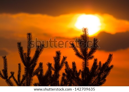 pine tree silhouette on a red evening sky background - stock photo