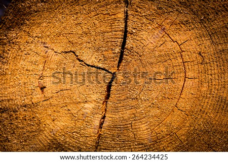 pine tree stump texture abstract natural background - stock photo