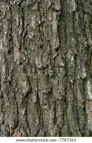 pine tree texture useful to create 3d material or mapping - stock photo