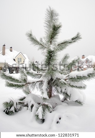 pine tree under snow in winter - stock photo