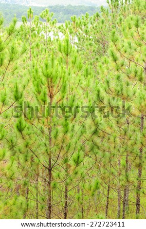 Pine tree with green leaves pattern.
