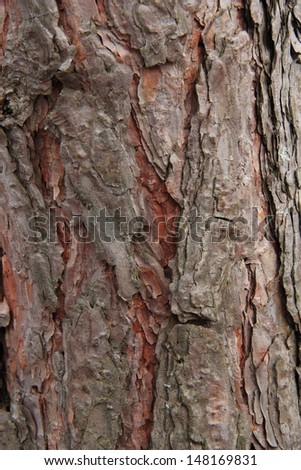 Pine tree wooden surface background