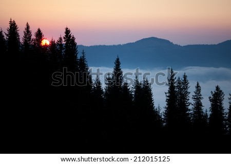 Pine trees and mountains at sunrise, covered mist - stock photo