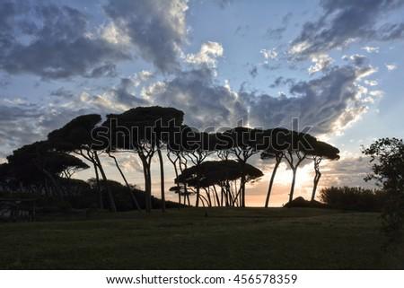 pine trees at Baratti Beach, Italy - stock photo