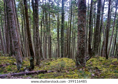 Pine Trees at Mountain Landscape. Vibrant Colors - stock photo