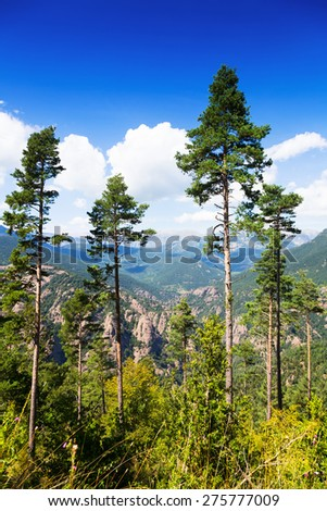 pine trees at mountains in sunny day - stock photo