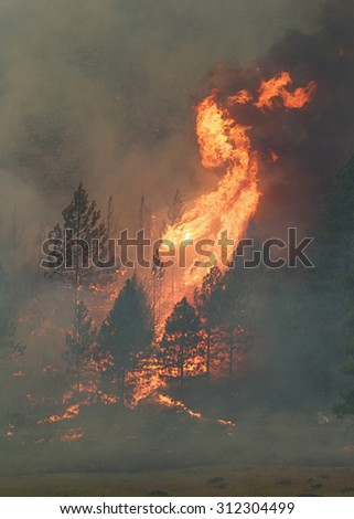 Pine trees burst into flame and smoke during the 2015 Okanogan Complex Fire, the largest, most destructive wild fire in Washington State history - stock photo
