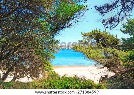 pine trees by the shore in Capo Testa, Sardinia - stock photo