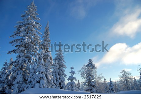 Pine trees covered with fresh snow - stock photo