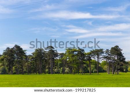 Pine trees in Phoenix Park Dublin Ireland - stock photo