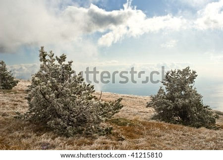 pine trees my a bright day - stock photo