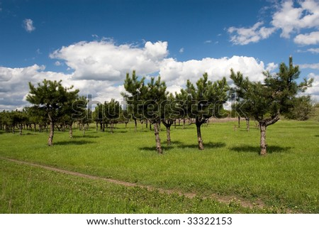 Pine trees near the old colliery in Donbass in Ukraine - stock photo