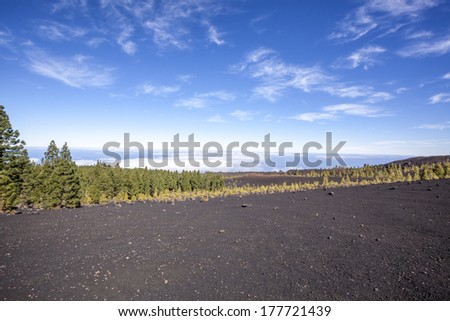 pine trees on a volcanic landscape in Tenerife - stock photo