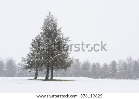 Pine Trees on Snowy, Winter Day - stock photo