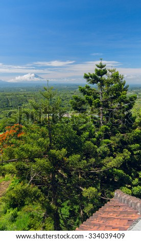 Pine trees on the background of the Balinese landscape - stock photo