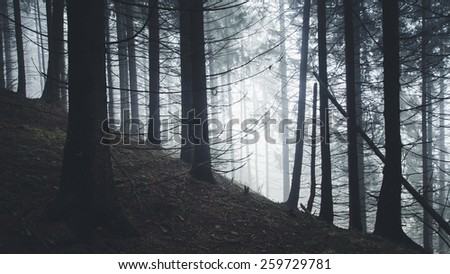 pine trees silhouettes at the edge of forest - stock photo