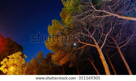 pine trees under a starry sky, Sardinia - stock photo