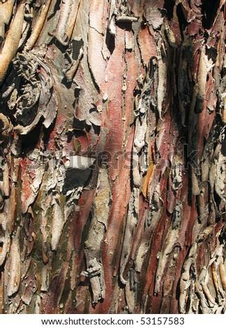 Pine Trunk - stock photo