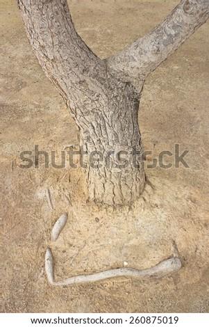 pine trunk texture - stock photo