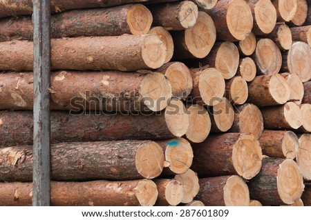 Pine trunks stacked for removal; forestry sector - stock photo
