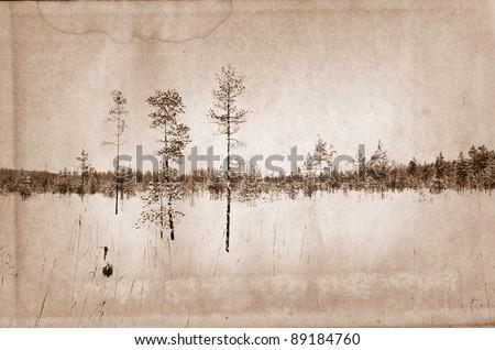 pine wood on grunge background - stock photo